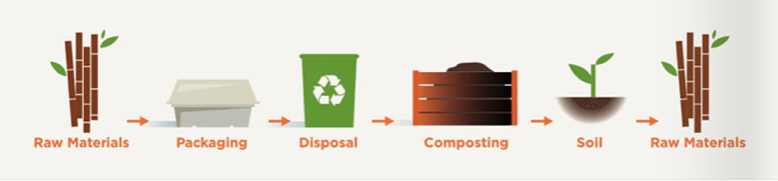 BePulp Compostable Explained